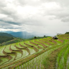 chiang-mai-rice-field-landscape-thailand_rvkZeVeu2fl